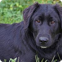 Adopt A Pet :: *Logan - PENDING - Westport, CT