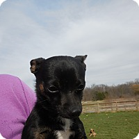 Adopt A Pet :: Digger - Howell, MI