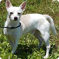 Adopt A Pet :: BamBam(9 lb) New Pics/Video - SUSSEX, NJ