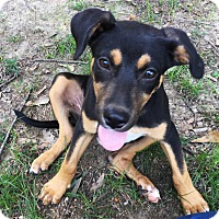 Adopt A Pet :: Lizzy - one happy girl - Stamford, CT