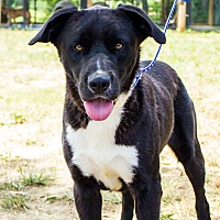 Adopt A Pet :: Happy - Jasper, AL