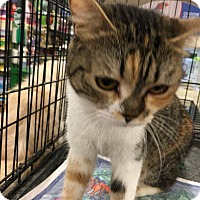 Adopt A Pet :: Kadi - Pittstown, NJ