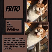 Adopt A Pet :: Frito - CLEVELAND, OH