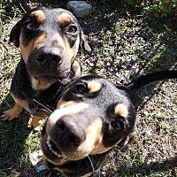 Adopt A Pet :: Cruz - Sidney, NE