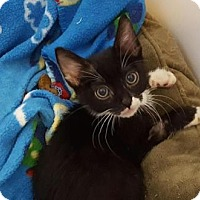 Adopt A Pet :: Chaz - Encinitas, CA