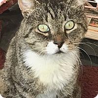 Adopt A Pet :: Monty - Wantagh, NY