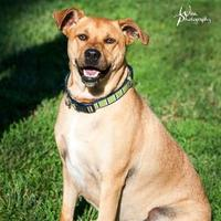 Adopt A Pet :: Winston - Merriam, KS
