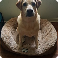 Adopt A Pet :: Princess - Okeechobee, FL