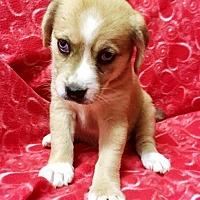 Adopt A Pet :: I'M ADPTD Mstry Gang Veronica