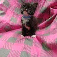 Adopt A Pet :: Oyster - Greensboro, NC