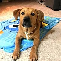 Adopt A Pet :: Riley - Denton, TX