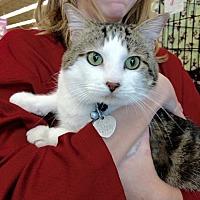 Adopt A Pet :: Bunny - Maryville, TN
