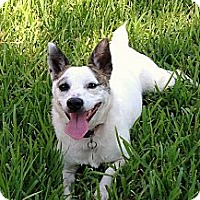 Adopt A Pet :: Gypsy Ann in Beaumont - Houston, TX