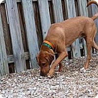 Adopt A Pet :: Trigger - Novelty, OH