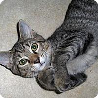 Adopt A Pet :: Amelia - Richmond, VA