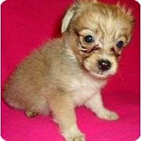 Adopt A Pet :: Gage - Plainfield, CT