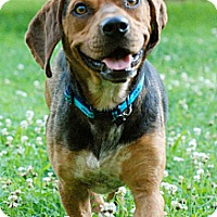 Adopt A Pet :: Barnes - Hagerstown, MD