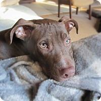 Adopt A Pet :: Sam I am - Chattanooga, TN