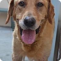 Adopt A Pet :: Skylar - White River Junction, VT