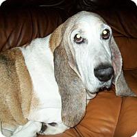 Adopt A Pet :: Ethel - Columbia, SC