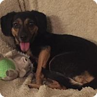 Adopt A Pet :: Sprite - Richmond, VA