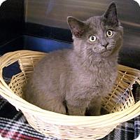 Adopt A Pet :: Jackson - Toledo, OH