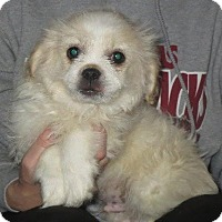 Adopt A Pet :: Edison - Allentown, PA