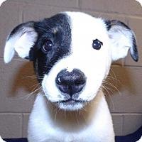 Adopt A Pet :: Alex - Oxford, MS