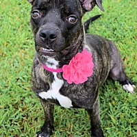Adopt A Pet :: 1707-0580 Mickey - Virginia Beach, VA