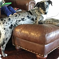 Adopt A Pet :: Buster - Franklin, TN