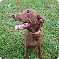 Adopt A Pet :: Jake - Austin, TX