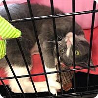 Adopt A Pet :: Cinders - Columbus, OH