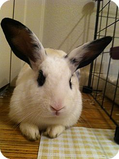 Other/Unknown Mix for adoption in Watauga, Texas - Dusty