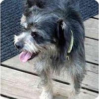 Adopt A Pet :: Bandit - Harrisburg, PA