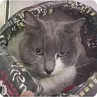 Adopt A Pet :: Abbie - Lunenburg, MA