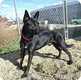 Shepherd (Unknown Type) Mix Dog for adoption in Meridian, Idaho - Ogden