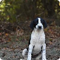 Adopt A Pet :: Silas - South Dennis, MA