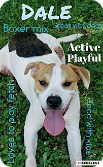 Boxer/Hound (Unknown Type) Mix Dog for adoption in Mount Holly, New Jersey - Dale