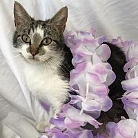 Adopt A Pet :: Quinty - Murfreesboro, NC