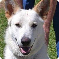 Adopt A Pet :: Apollo AD 05-20-17 - Preston, CT