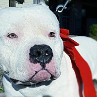 Adopt A Pet :: Murphy - Peoria, AZ