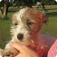 Adopt A Pet :: Winnie - Greenville, RI