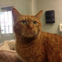 Adopt A Pet :: Camillia - Lufkin, TX