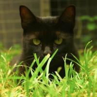 Adopt A Pet :: Jill - Ravenel, SC