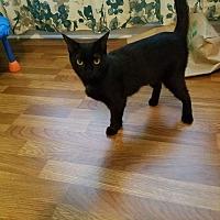 Adopt A Pet :: Jessie - Salisbury, NC