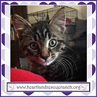 Adopt A Pet :: Guapo - Southport, FL
