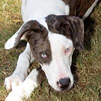 Adopt A Pet :: Thunderbird - Alpharetta, GA
