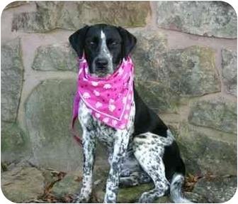 English Pointer Mix Puppy for adoption in Muldrow, Oklahoma - Jo Beth