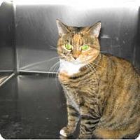 Adopt A Pet :: Rabble - Warminster, PA
