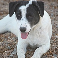 Adopt A Pet :: Swiss Eakas - Wynne, AR